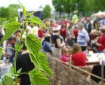Фестиваль крапивы пройдет в Тульской области