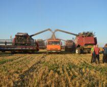 Рязанские аграрии намолотили первый миллион тонн зерна