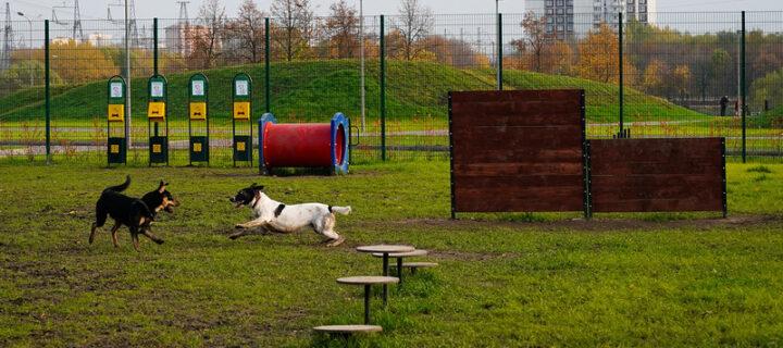 В четырех районах Москвы появились площадки для прогулок с собаками