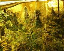 Безработный москвич оборудовал дачный дом для выращивания конопли