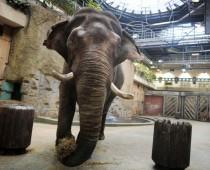 В Московском зоопарке открылся Музей слонов