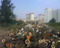 ОНФ требует остановить вырубку Баулинского леса в Подмосковье