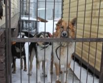ОНФ добился продления аренды для приюта бездомных животных