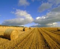 Подмосковные эксперты ОНФ обсуждают меры поддержки сельского хозяйства