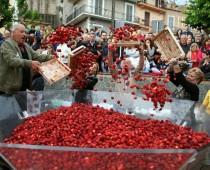 Почти 500 тонн ягод употребили москвичи на фестивале клубники