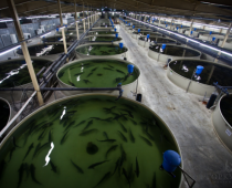 Крупнейшую в России рыбную ферму построят в Подмосковье