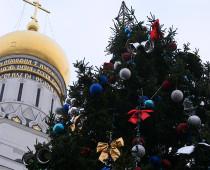 Новогоднюю ель для Соборной площади Кремля выбрали в Подмосковье