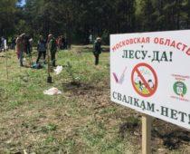 ОНФ провел акцию «Лесу – да! Свалкам – нет!» в Подмосковье