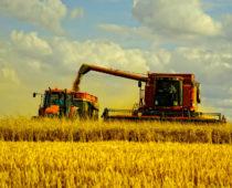 Воронежские аграрии установили рекорд по сбору урожая