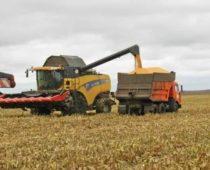 Воронежские аграрии намолотили три миллиона тонн зерна