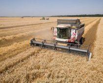 Аграрии Подмосковья собрали рекордный урожай зерновых