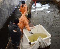 Под Смоленском запущена первая очередь комплекса по выращиванию осетровых