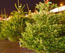Более 200 елочных базаров откроется в Москве 20 декабря