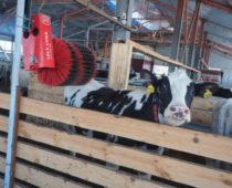 Роботизированная ферма за 70 млн руб. открылась в Калужской области