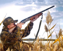 Сезон охоты начинается в Подмосковье 14 апреля