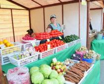 Почти 300 ярмарок пройдет в ноябре в Подмосковье