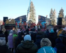 Главную новогоднюю ель страны доставят в Кремль из Подмосковья