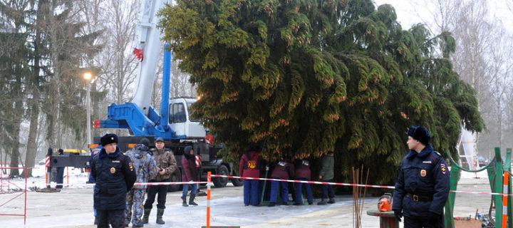 В Подмосковье пройдут проводы новогодней ели в Кремль