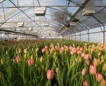 Первую очередь цветочного тепличного комплекса ввели в Смоленской области