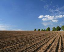 Россельхознадзор проверит качество земли экспортеров зерна под Москвой и Тулой