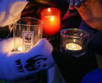 Подмосковье присоединится к акции «Час земли»