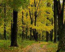 Четыре природных парка создадут в Подмосковье до 2026 года