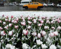 Москвичей предупредили о резком похолодании на Пасху