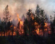 В Подмосковье зафиксированы первые лесные пожары