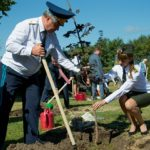Более 50 тыс. деревьев высадят в Подмосковье в рамках акции «Лес Победы»