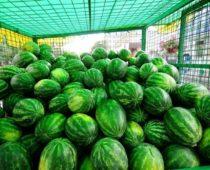 Более 430 торговых точек по продаже бахчевых откроют в Подмосковье