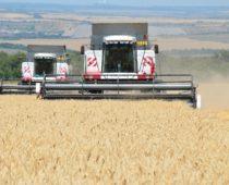 Воронежская область приступила к уборке зерновых