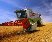 Уборка урожая зерновых началась в Подмосковье