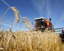 Подмосковье планирует увеличить экспорт сельхозпродукции почти на 40% к 2022г