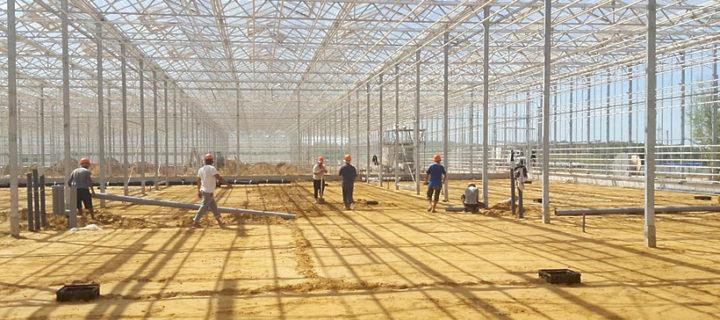 Более 6 млрд рублей инвестируют в строительство тепличного комплекса в Кашире