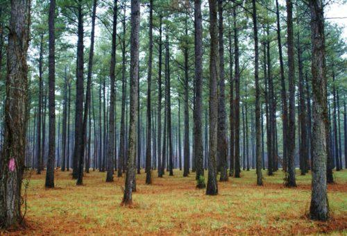 Более 1,4 млрд руб. направят на развитие лесного хозяйства в Подмосковье
