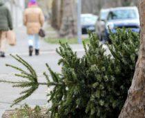 В Москве началась акция по сбору новогодних елей в переработку