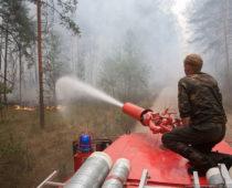 Более 110 га леса за день сгорело в Воронежской области