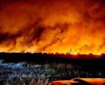 Прокуратура проводит проверки после лесных пожаров в Воронежской области