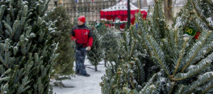В Москве открылись 207 елочных базаров