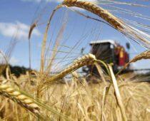 Тамбовская область  увеличила экспорт продукции АПК в 2,8 раза в 2020 году